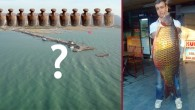 Bu Balık Beyşehir Gölü'nde Tutuldu