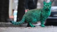 'Yeşil Kedi'nin Sırrı Çözüldü!