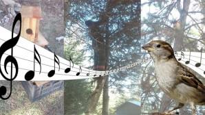 Büyükşehir'den Beyşehir Mezarlığında Kuşlar İçin Yuva