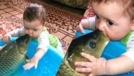 Sazan Balığı ve Bebeğin Öpüşmesi Çok Tatlılar