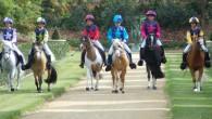 Çocuklar Pony Atlarıyla Tanışacak